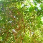 スピリチュアルあまら 浄化に関する新発見 インド ケララ ポンムディ