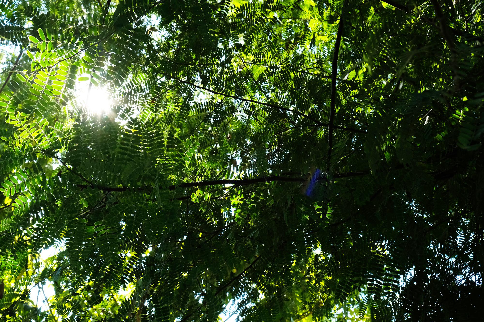 スピリチュアルあまら タイの風景タマリンド