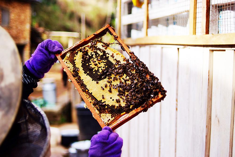 蜂蜜の効果